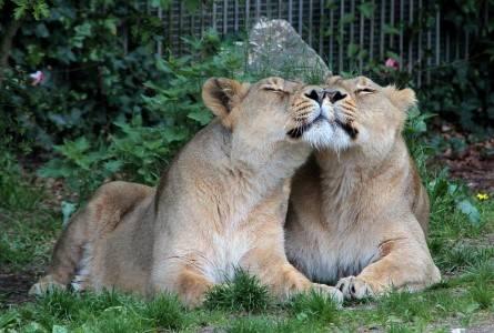 Aalborg Zoo rabat amatør bryster